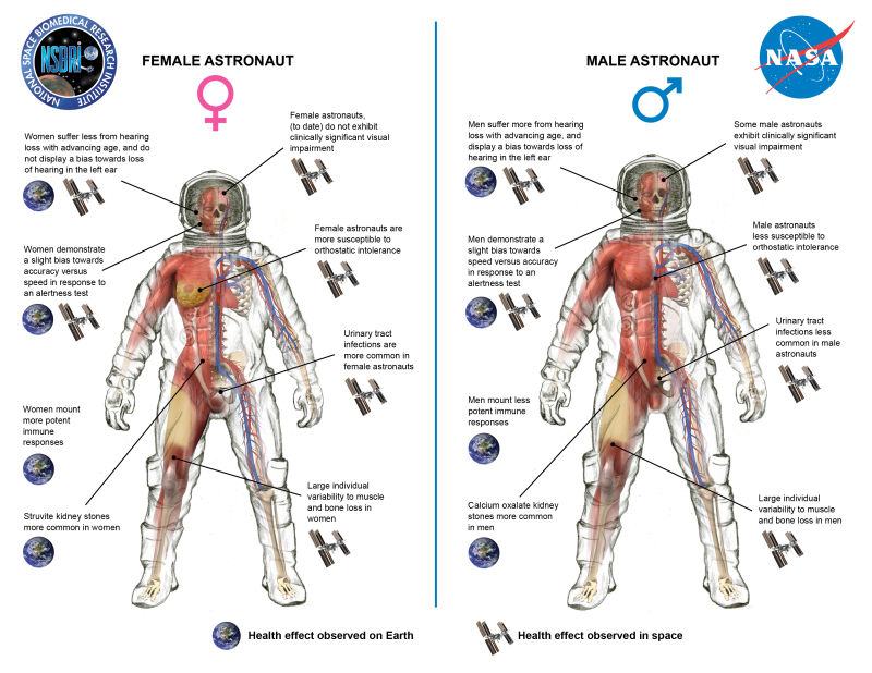 How space affects male vs. female astronauts/ Image created by the  National Space Biomedical Research Institute , NASA