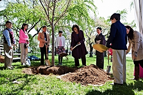 First Lady Michelle Obama plants a tree at the centennial Cherry Blossom Festival in 2012. Photo credit: whitehouse.gov