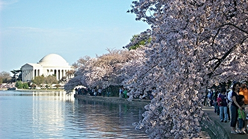 Photo credit: National Cherry Blossom Festival