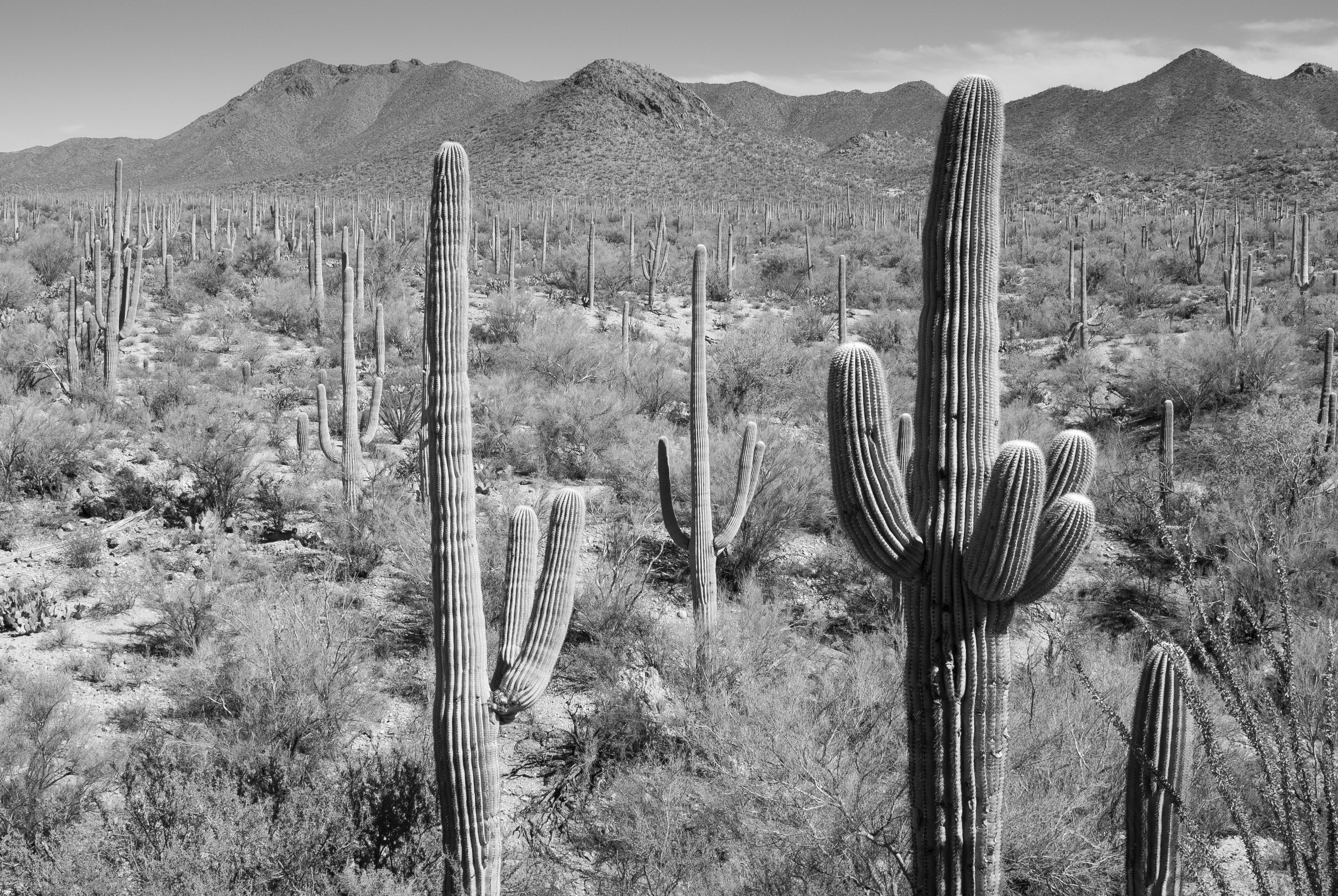 Saguaro National Park, Arizona, 2018