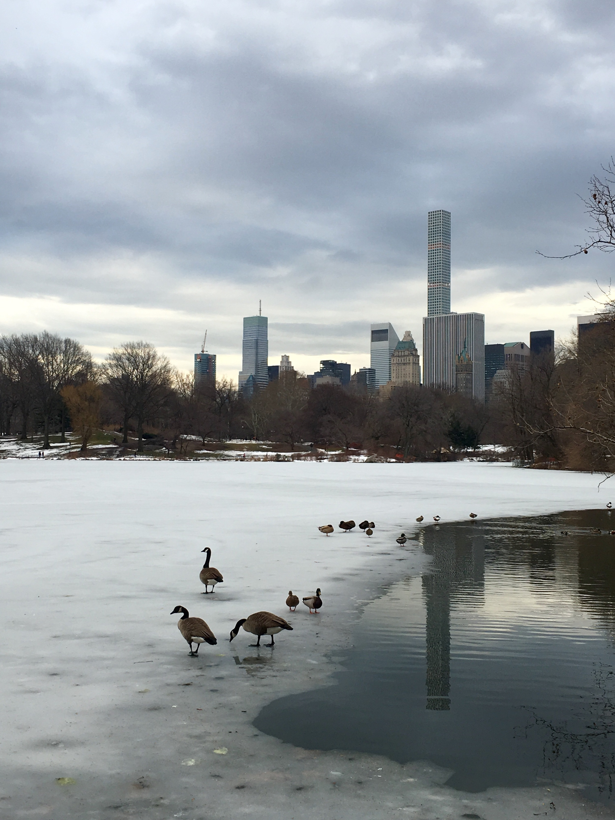 A wintry Central Park