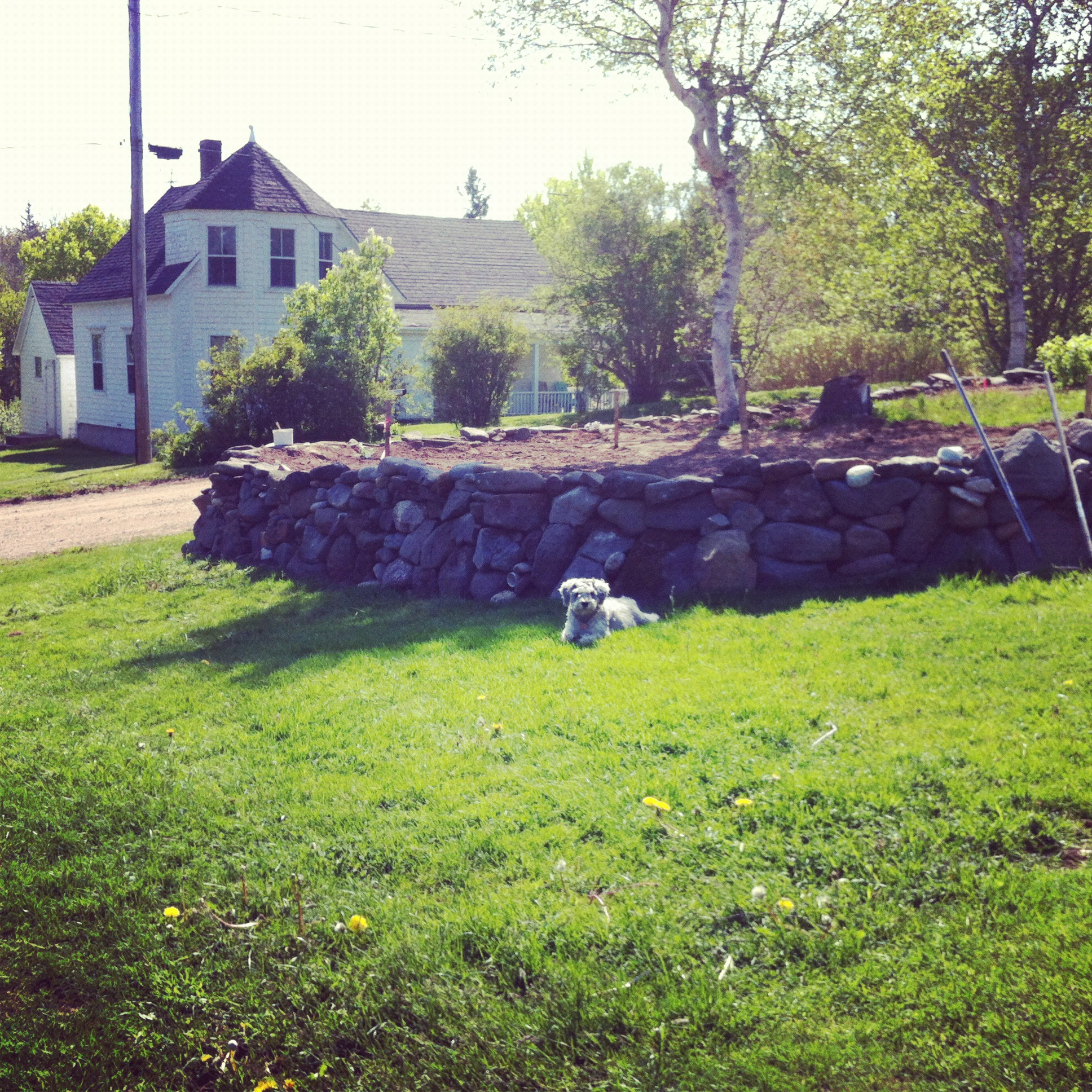 Farm dog Casey with the Rock Wall Erin built.