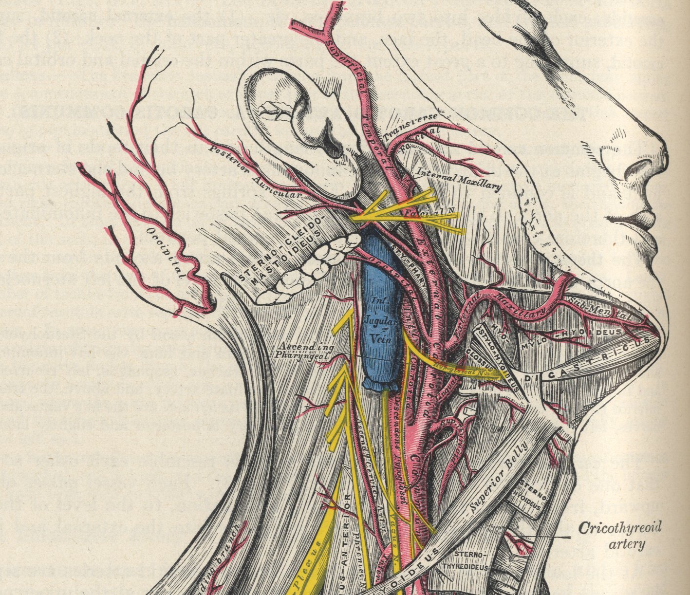 Articulation of a system embedded in others systems. Illustration by Henry Vandyke Carter, From Gray's Anatomy. 1858.