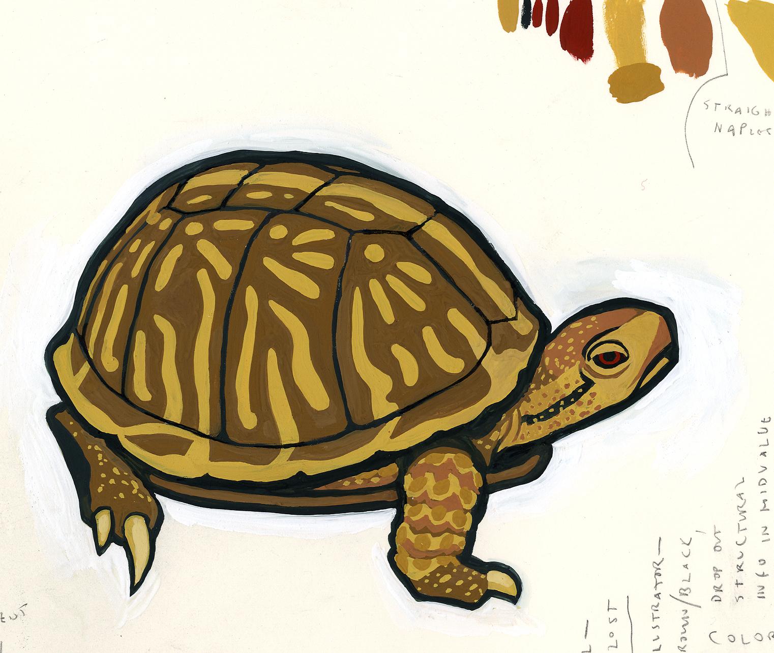ornate box turtle.jpg