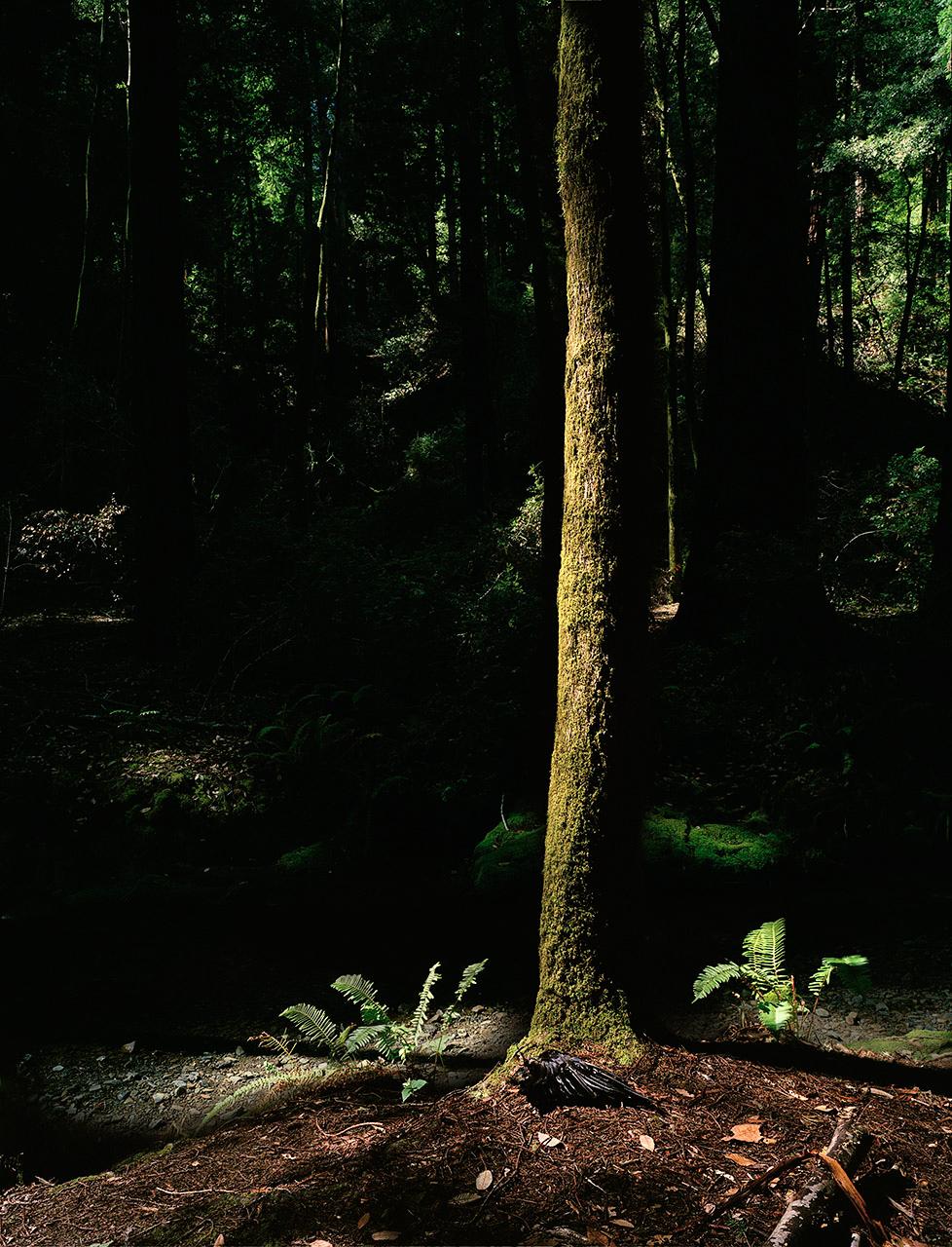 Kelly Neal Forest-3.jpg