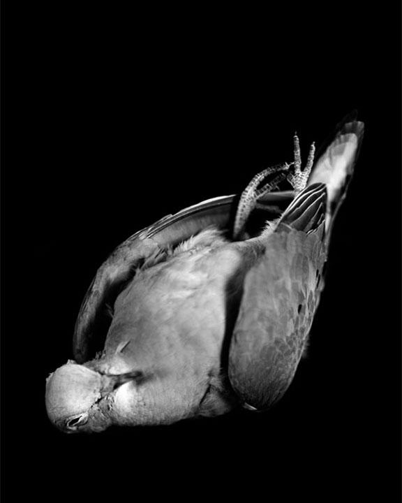 bird11x14.jpg