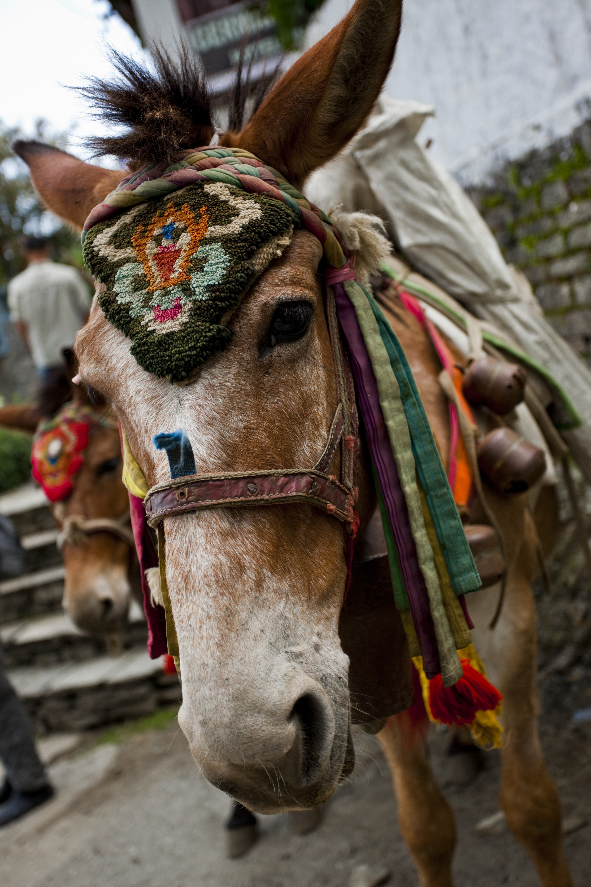 Festive Mule