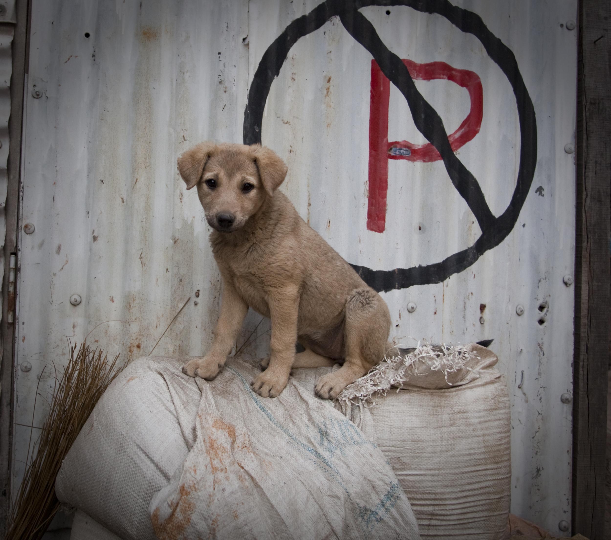 No Puppy Parking