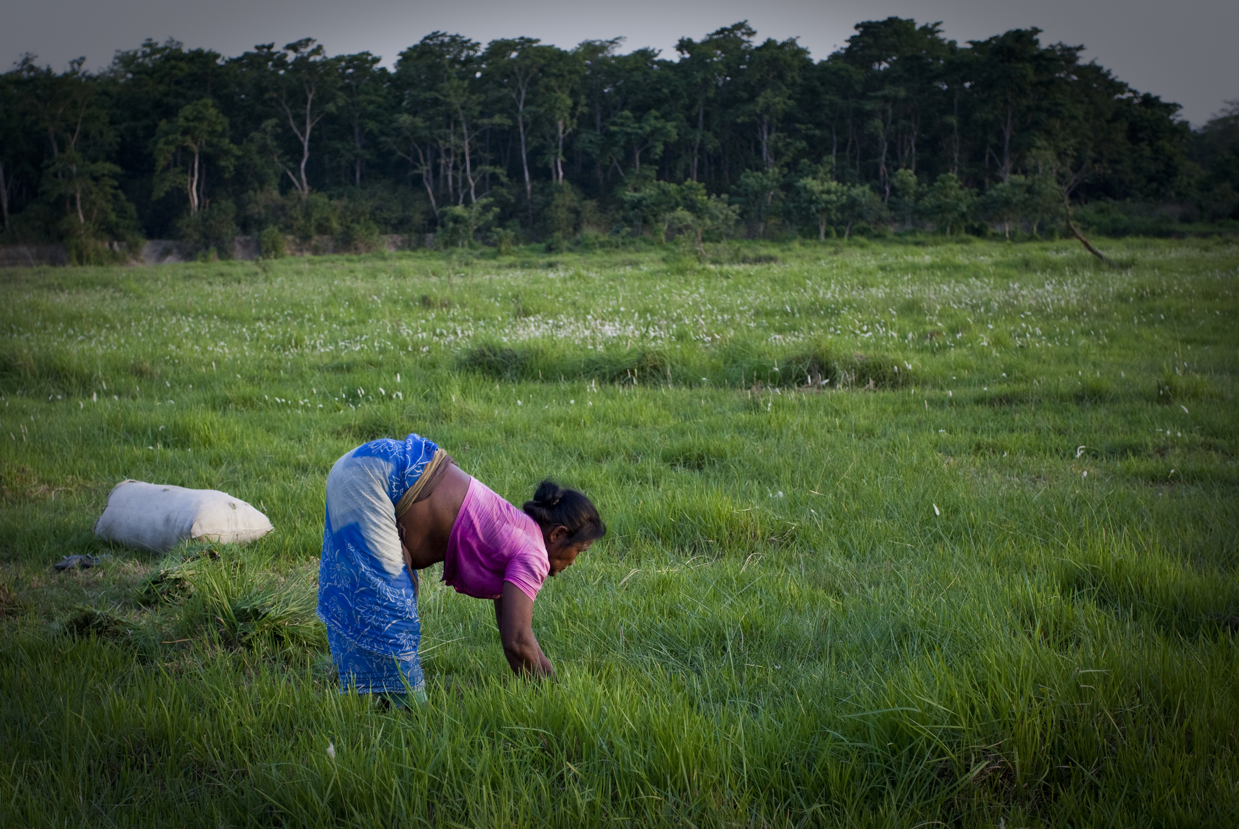 Working in the Chitwan Fields