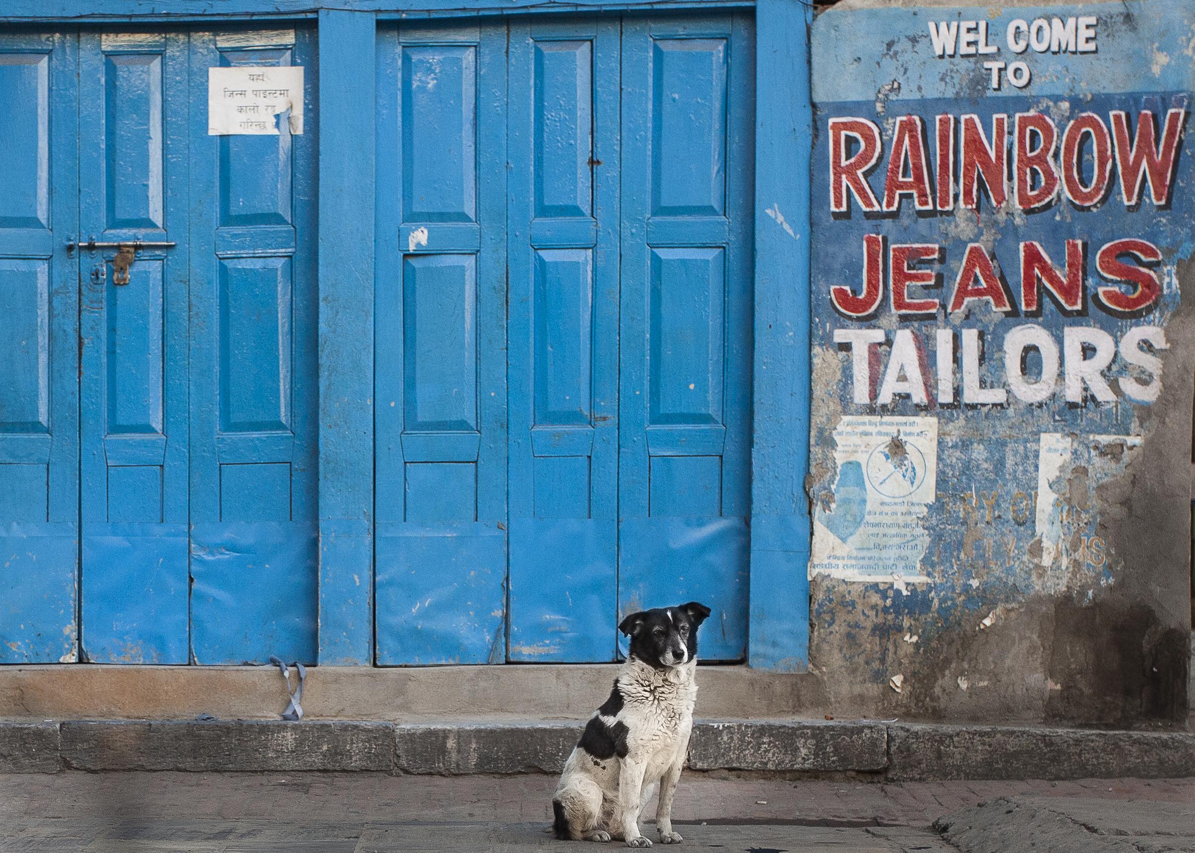 rainbow jeans dog 5x7.jpg