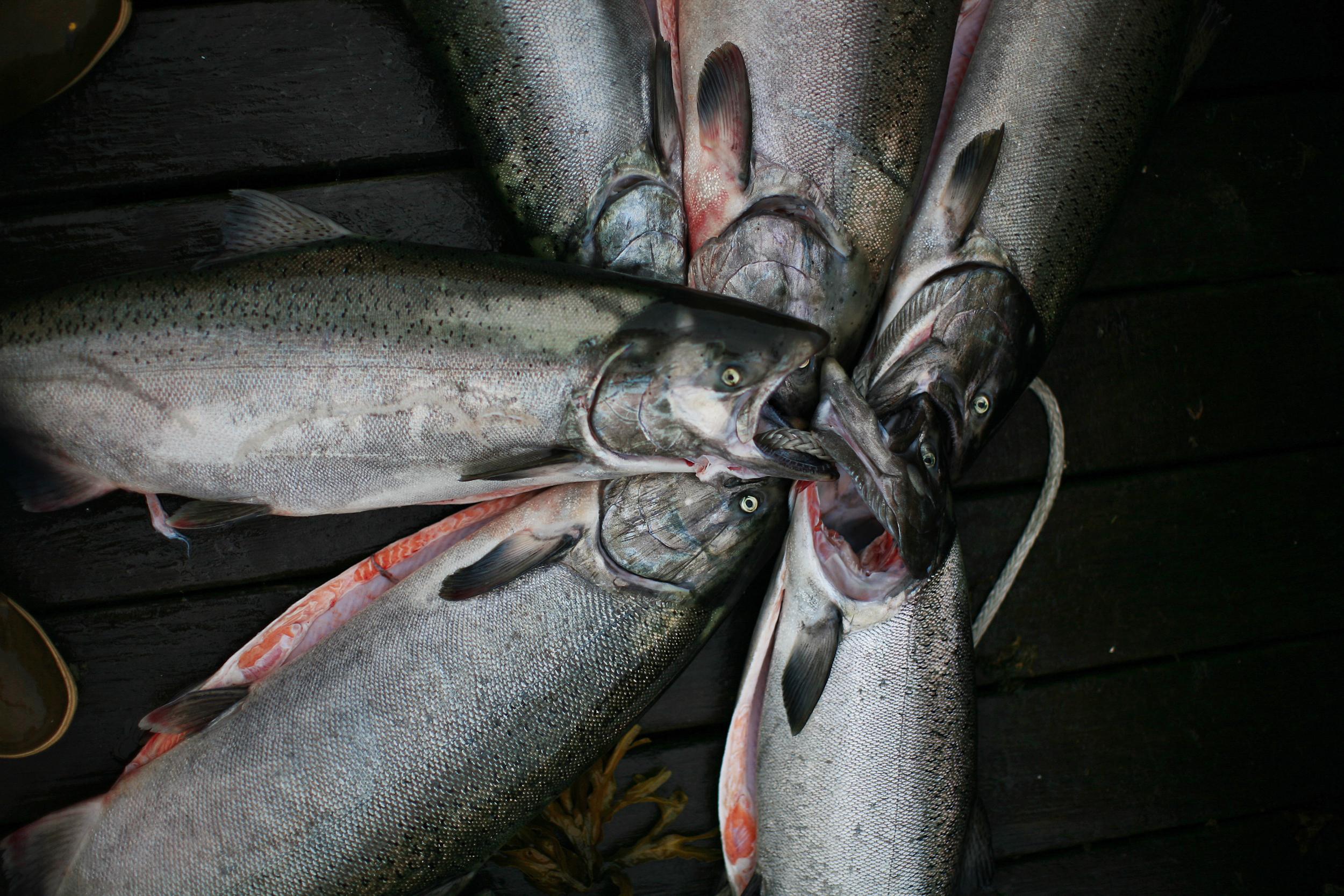 080705 King Salmon.jpg