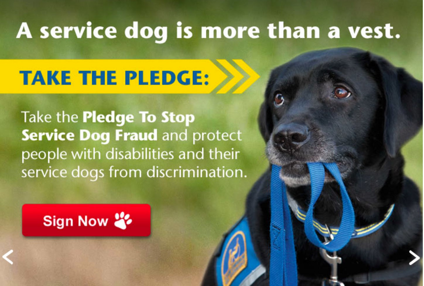 Photo credit: Canine Companions for Independence