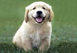 puppy image.jpeg
