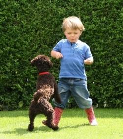 dog jumping on kid.jpg