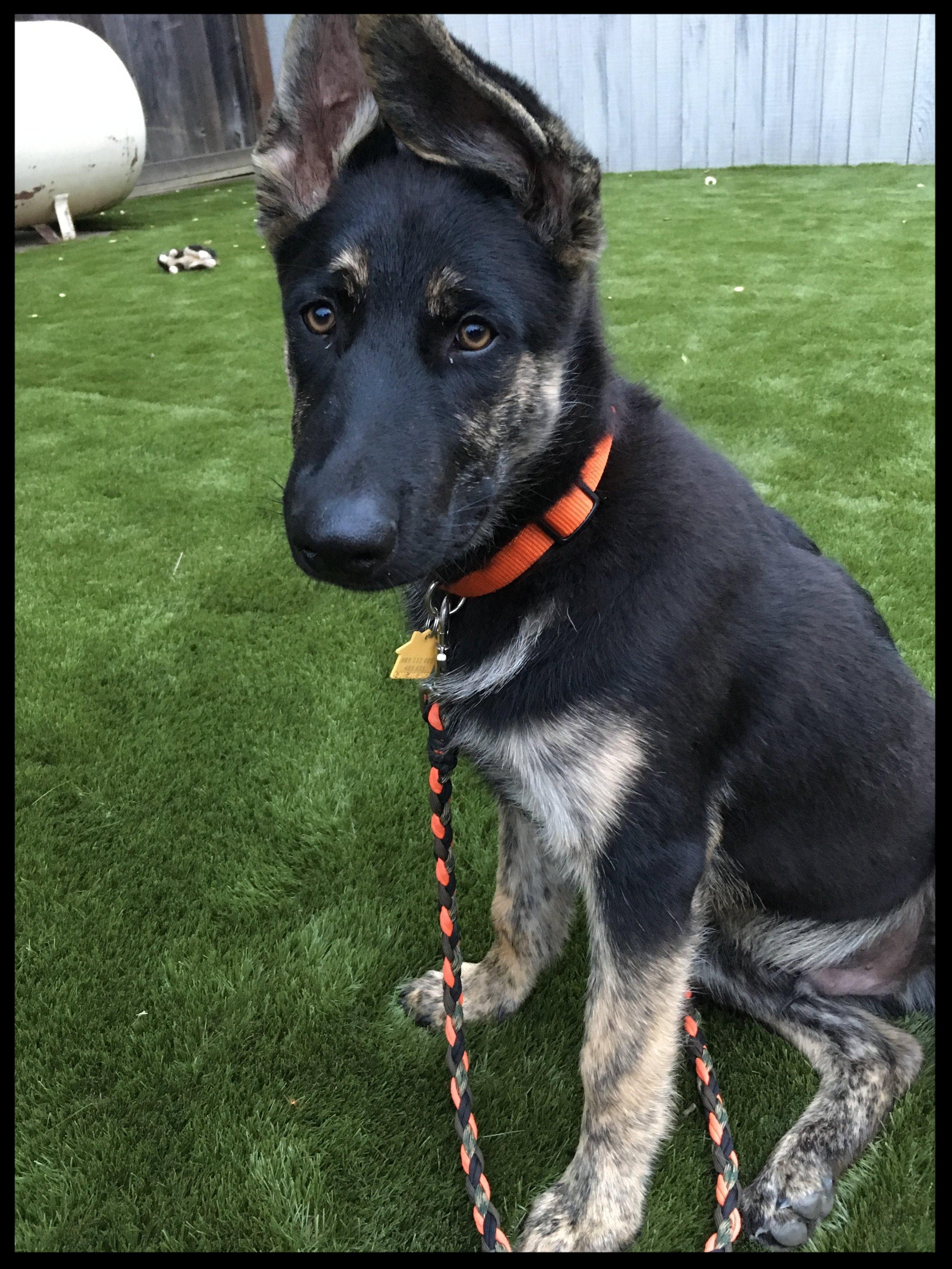 A favorite puppy client