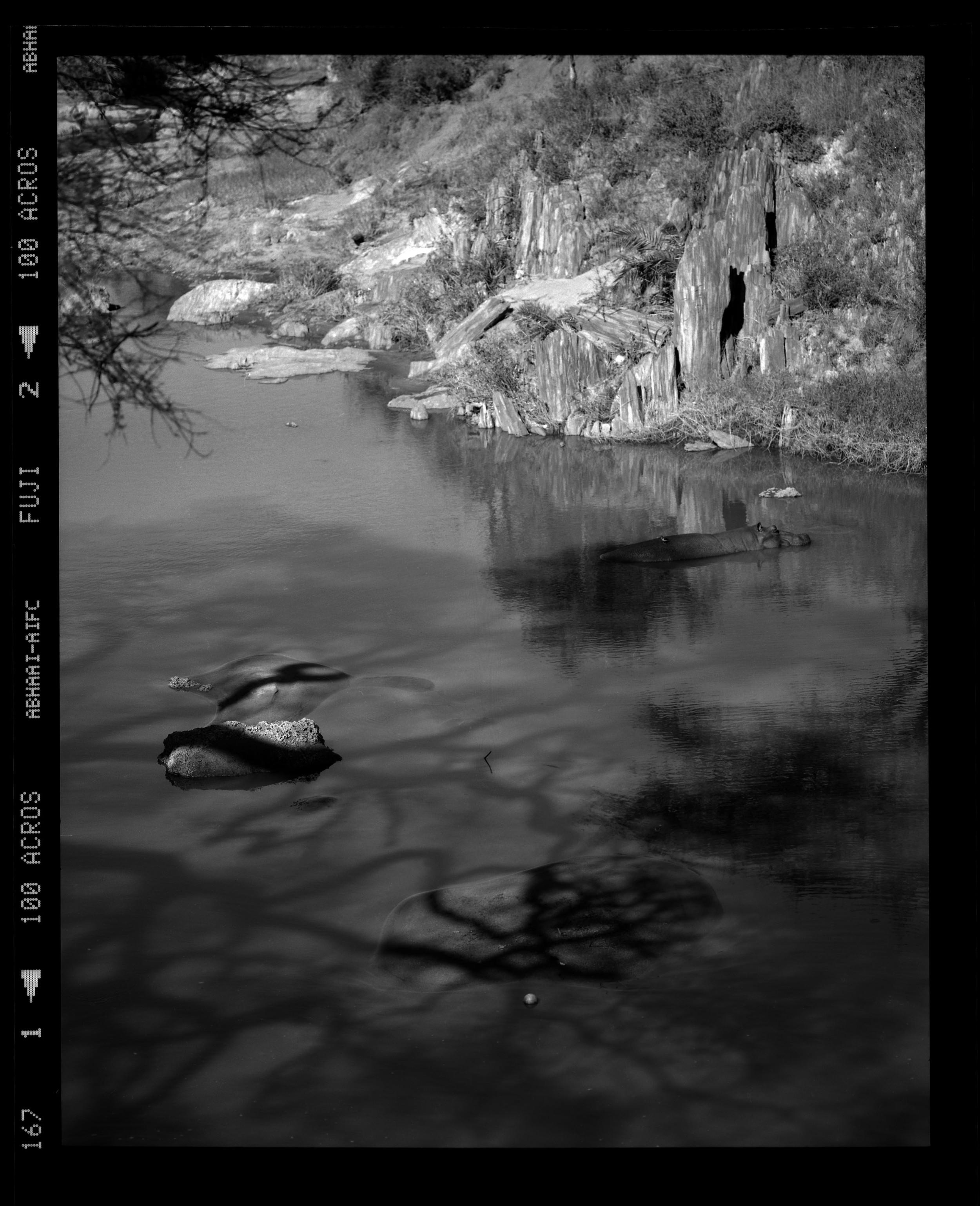 """Hippopotamus Resting in the Shadows"""