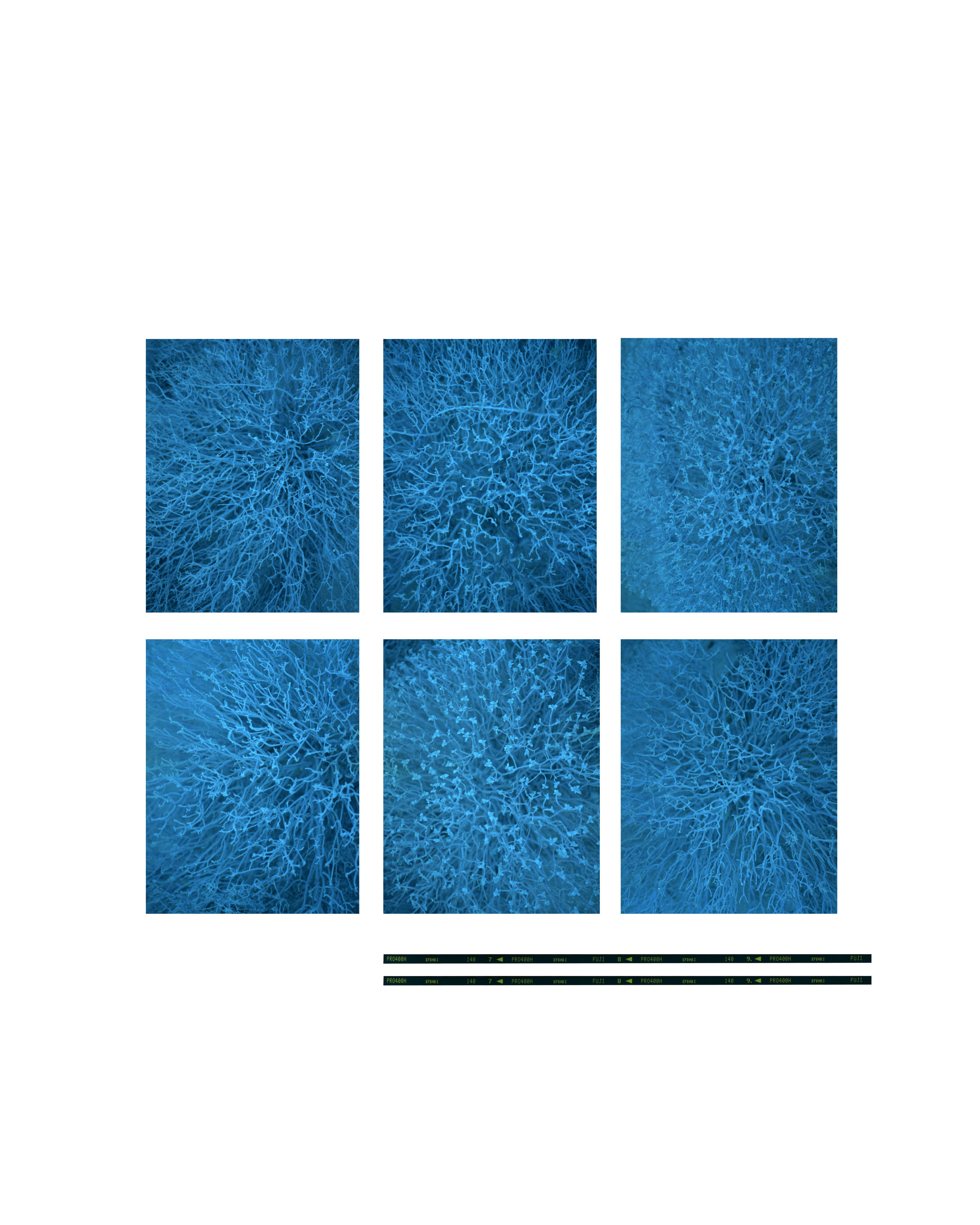 cyanotypePS.jpg