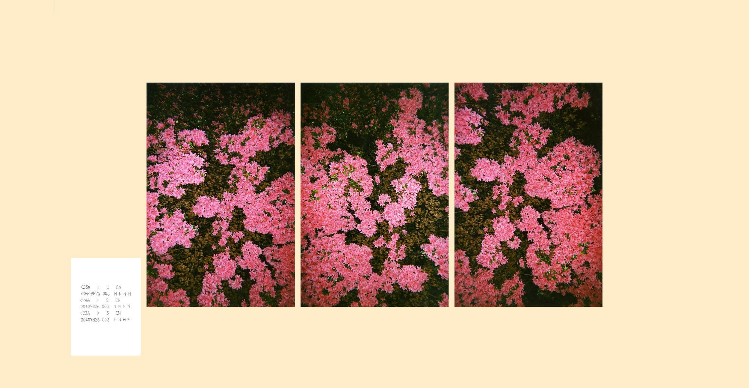 disp.panel.jpg