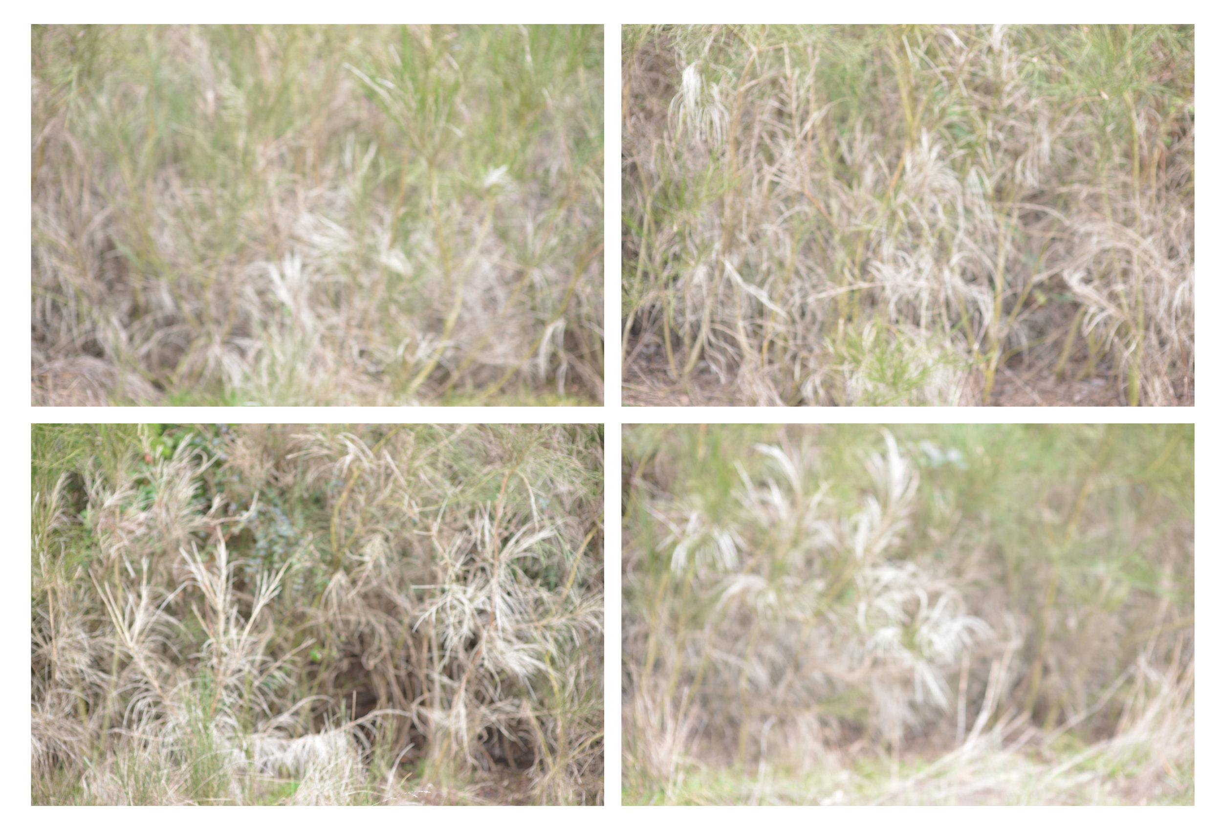 grassfrag.jpg
