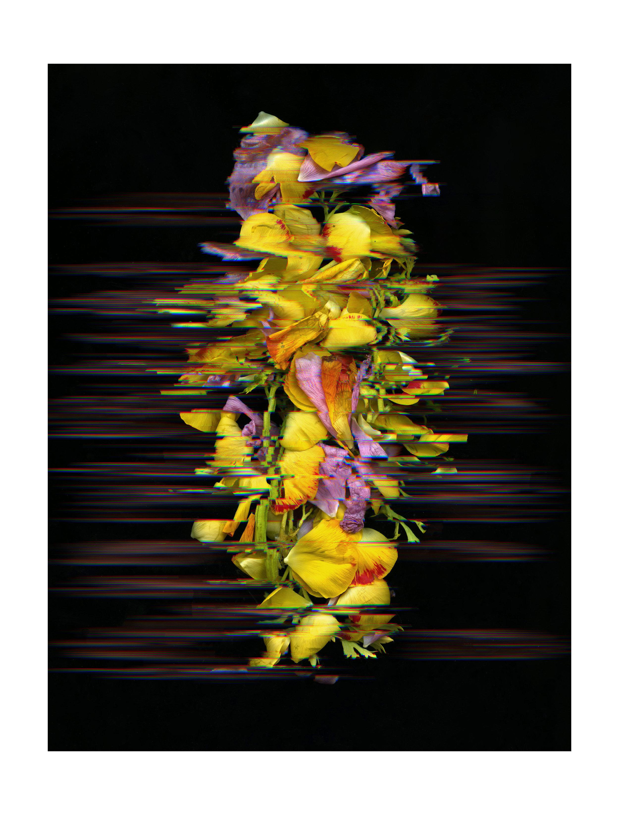 FlowerScan039editbordersmall.jpg