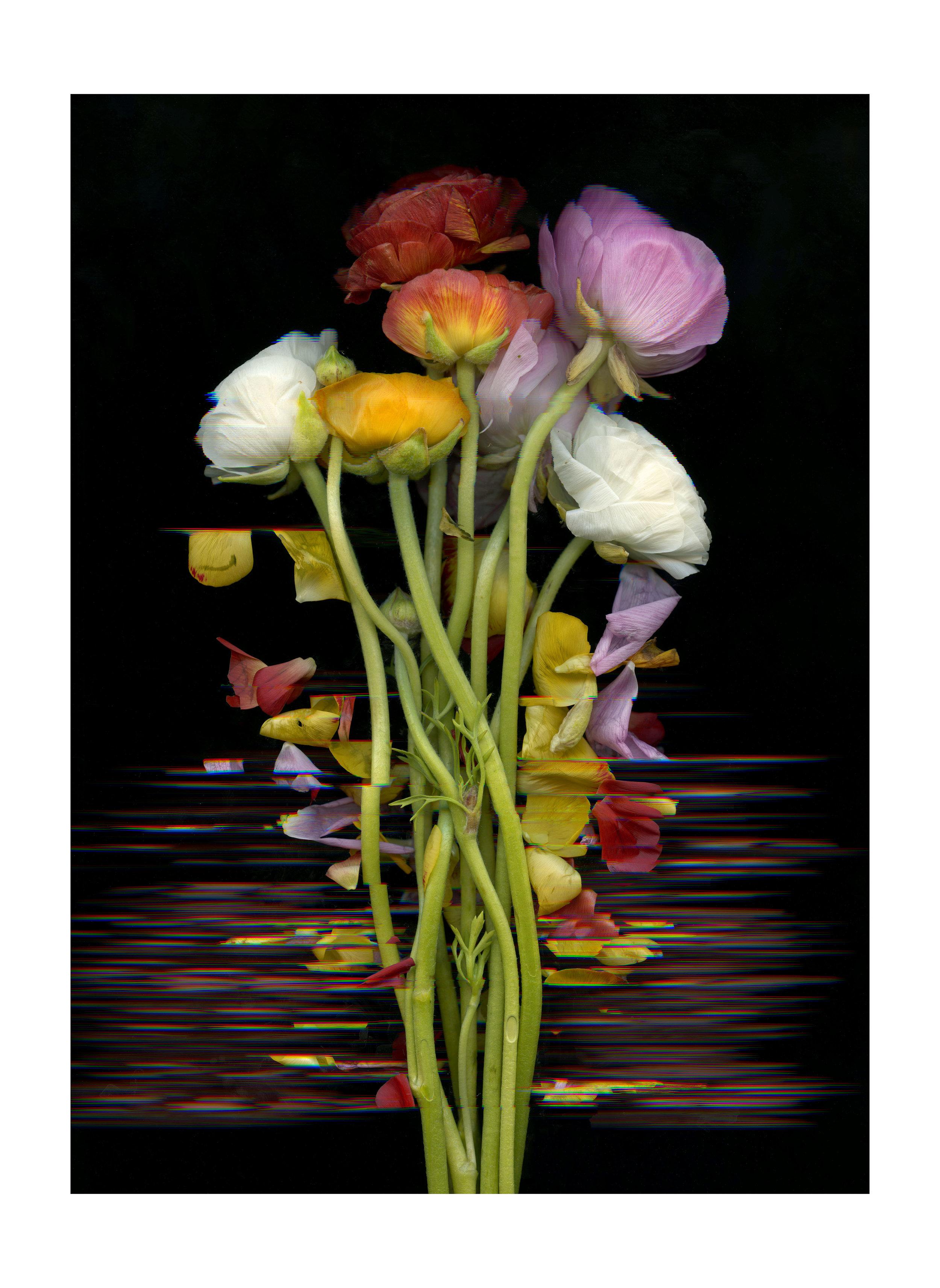 FlowerScan042editbordersmall.jpg