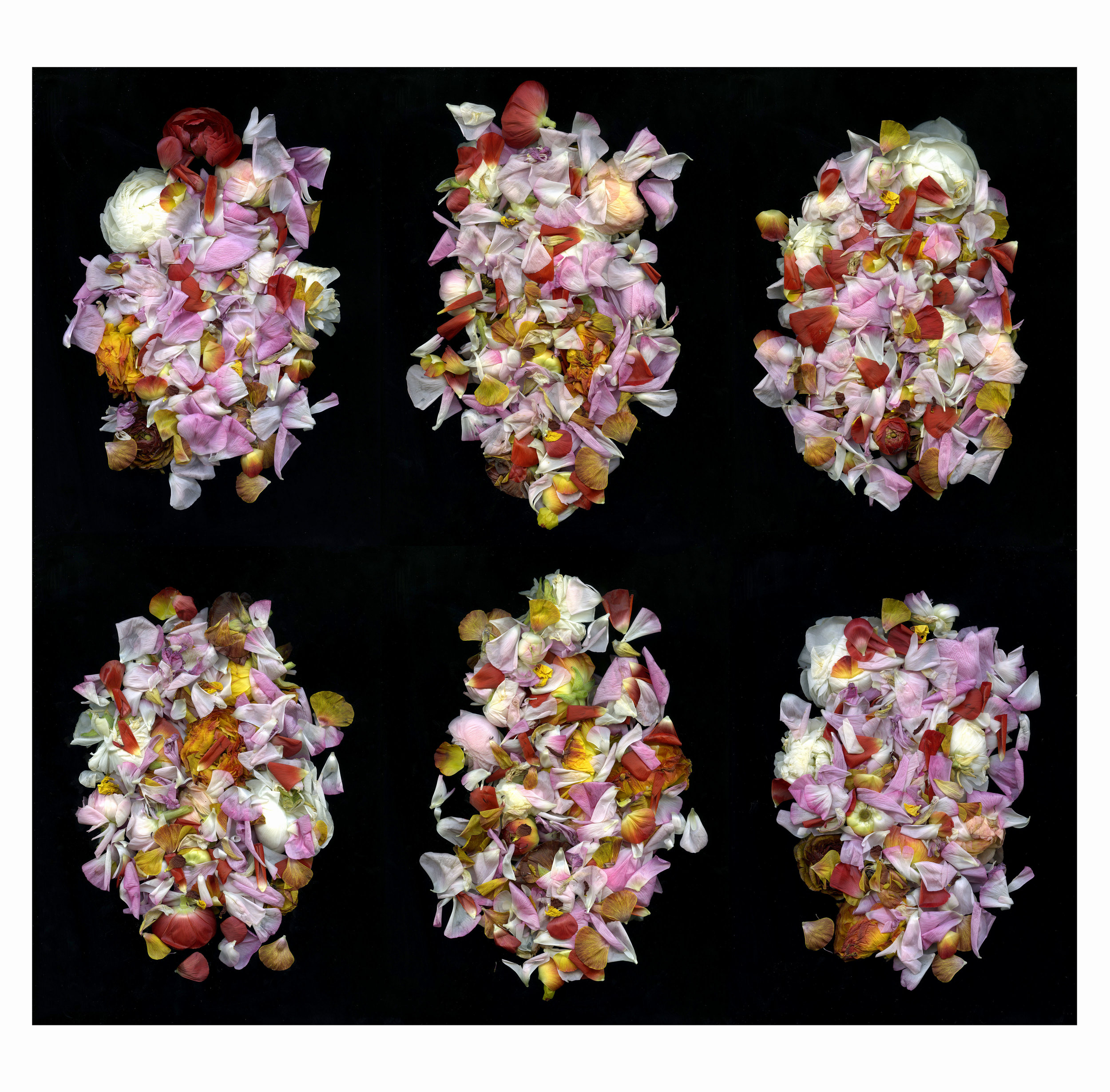 variations on a bouquet.jpg