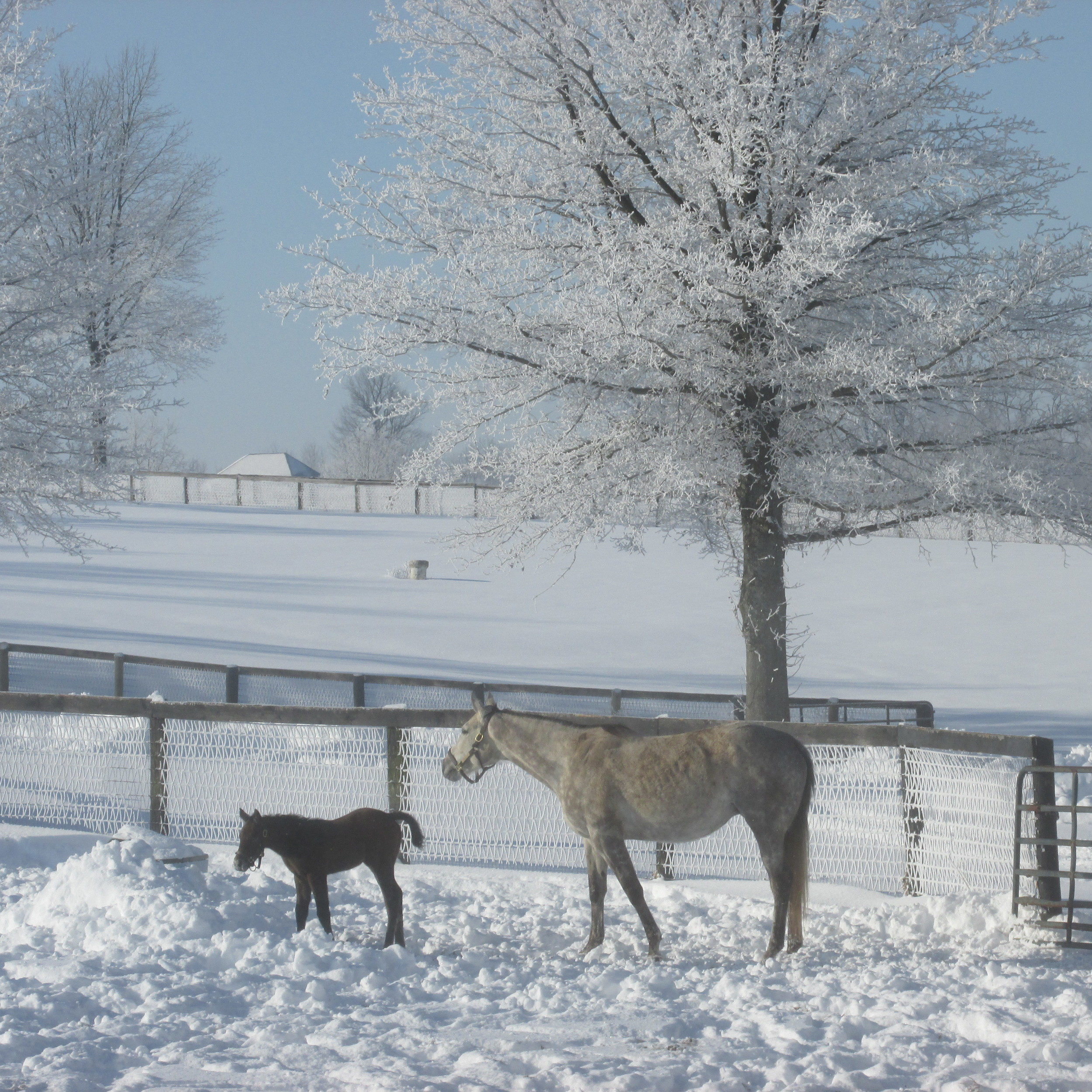 Forever Vow + Tale of the Cat Colt.JPG
