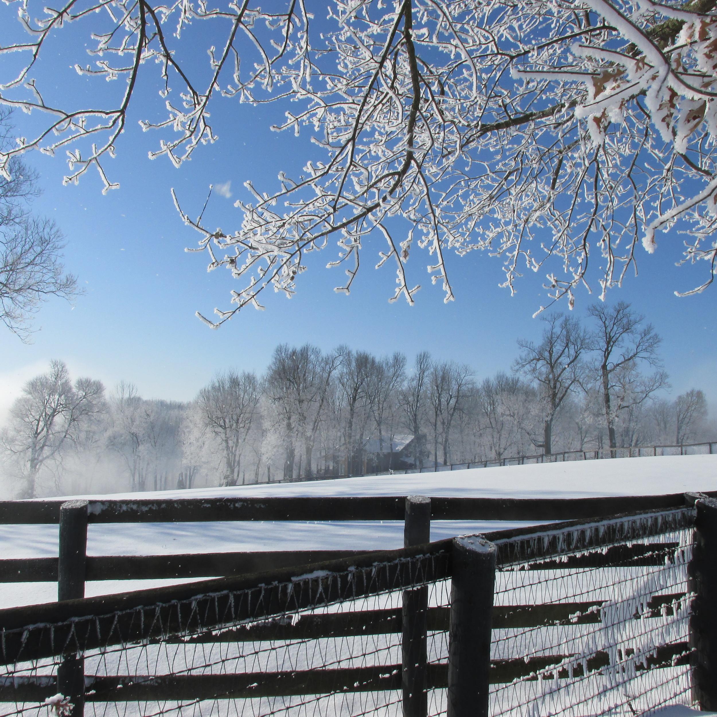 Frankfort Park Farm after the snowstorm.JPG