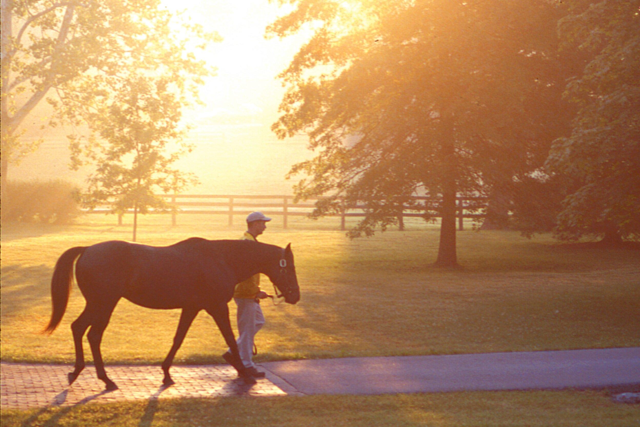 Claiborne+Farm+walk+at+sunset-01.jpg