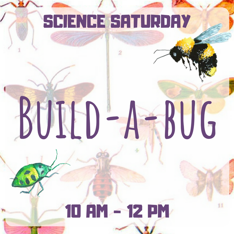 SCIENCE SATURDAY Build A Bug.png