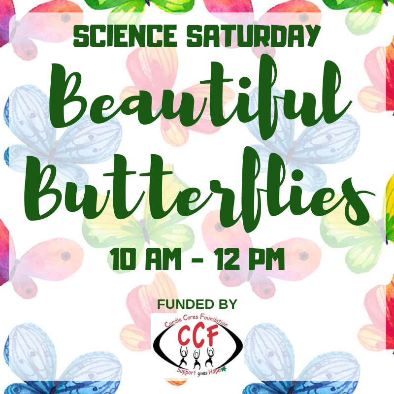 SCIENCE SATURDAY Beautiful Butterflies.png