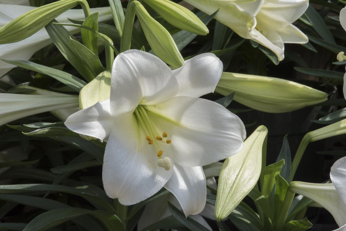 Spring Flowers-81.jpg