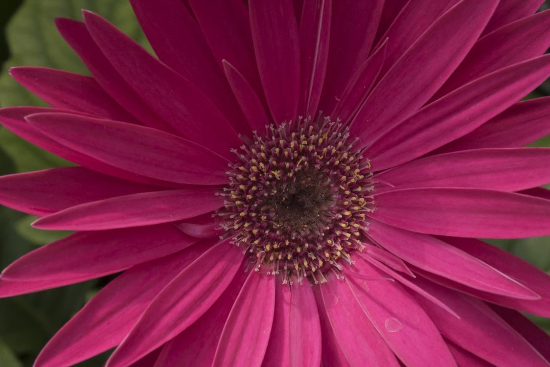 Spring Flowers-28.jpg
