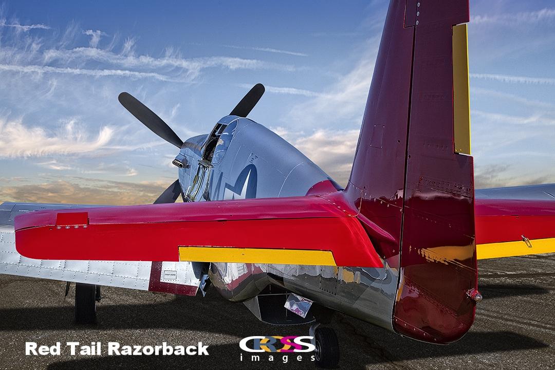Red Tail Razorback for Judi.jpg
