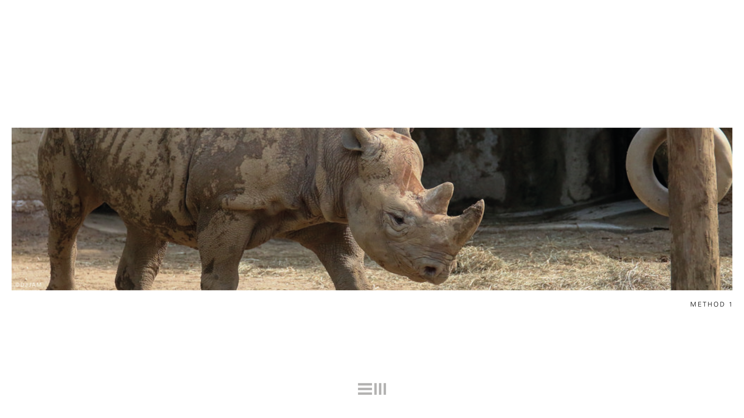 Seyia Project_Black Rhino_Design Options6.png