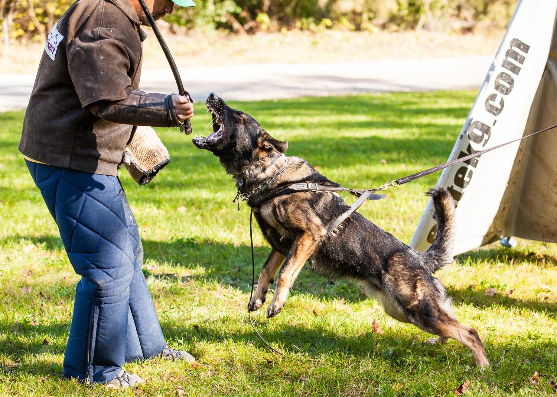 dogstyle-seminar-2