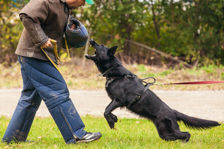 dogstyle-seminar-7