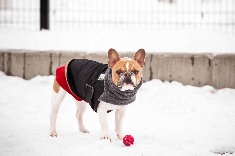 dog-park-02-18-14-1