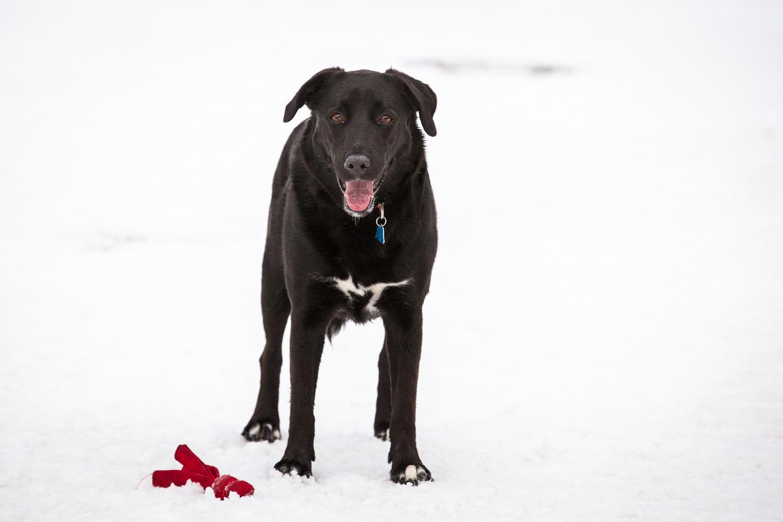 dog-park-02-18-14-3