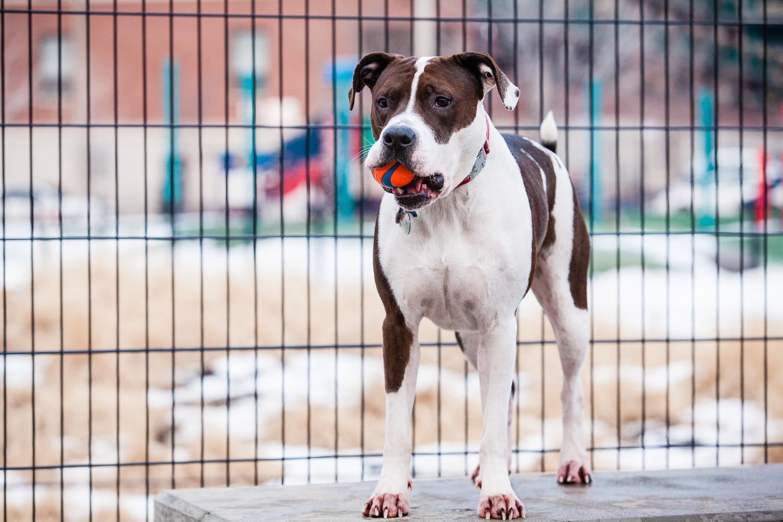 dog-park-03-07-14-1