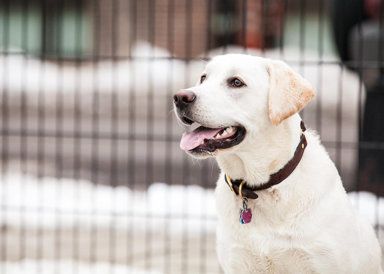 dog-park-03-07-14-2