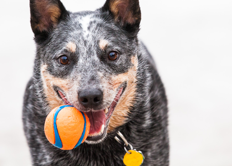 dog-park-03-07-14-3