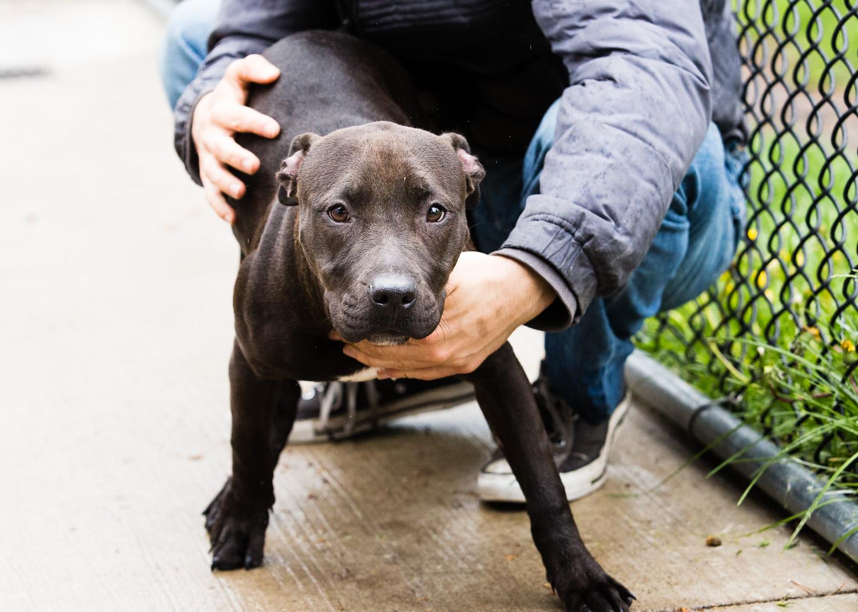 dog-foster-05-17-14-mariah-2