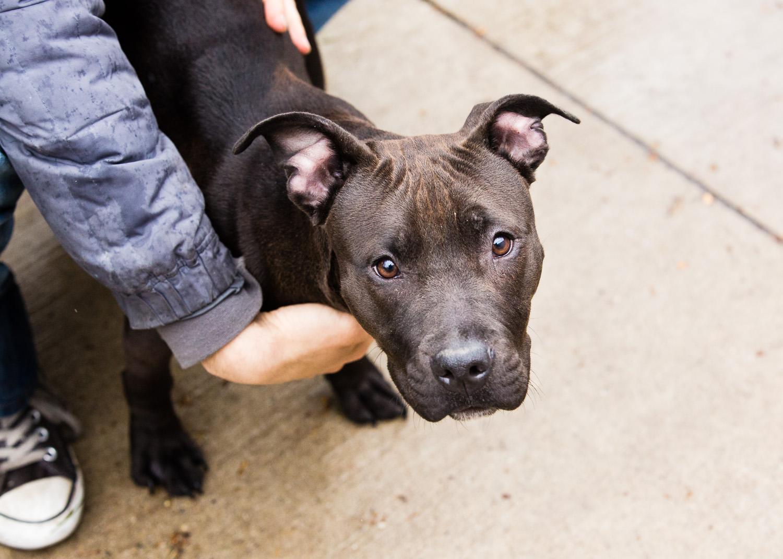 dog-foster-05-17-14-mariah-3
