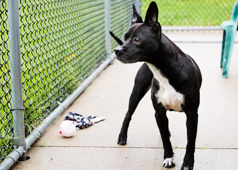 dog-foster-05-17-14-shadow-2