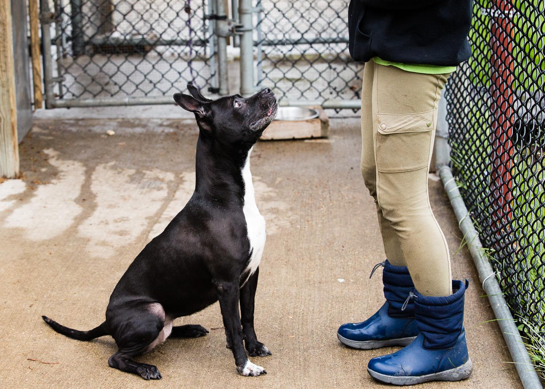 dog-foster-05-17-14-shadow-1