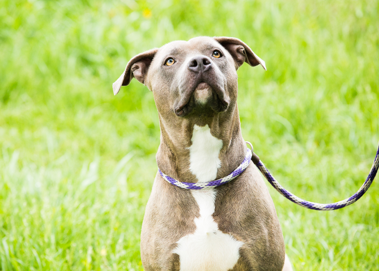dog-foster-05-17-14-mama-1