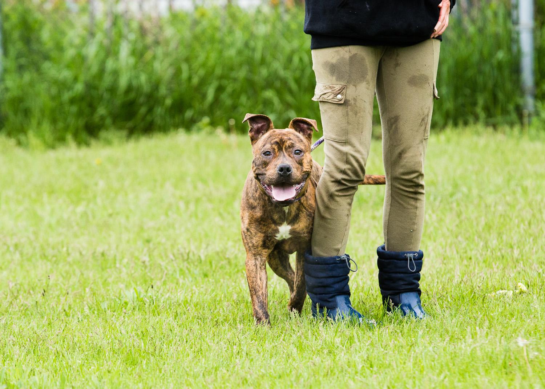 dog-foster-05-17-14-ronnie-1
