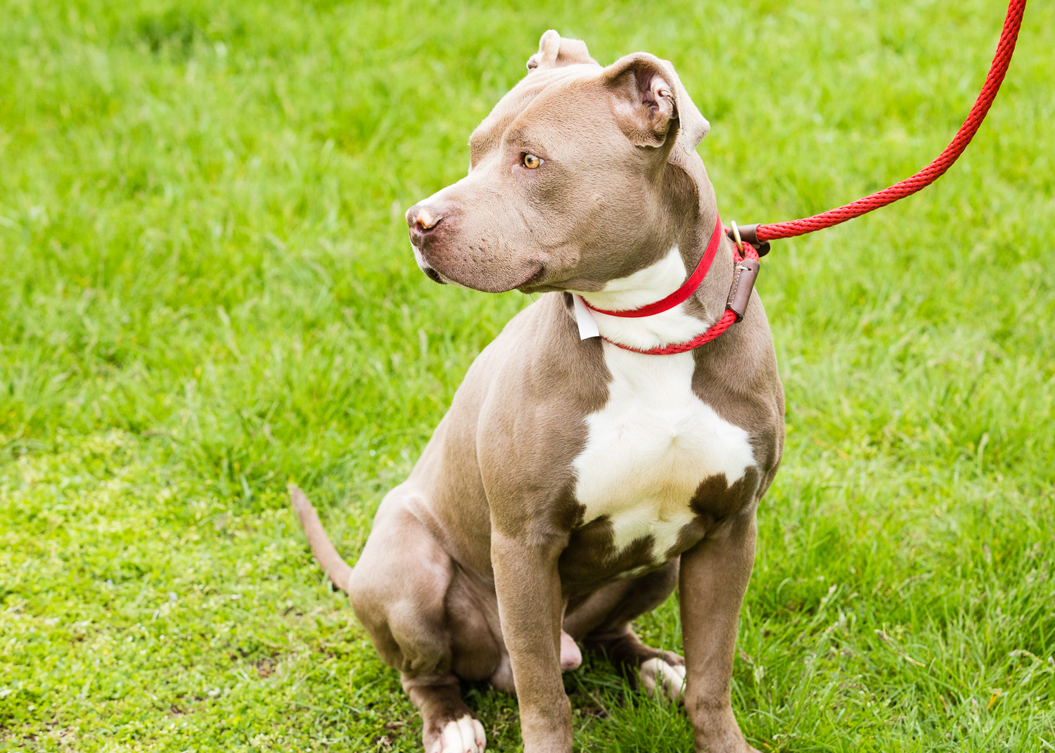 dog-foster-05-17-14-rizzo-1