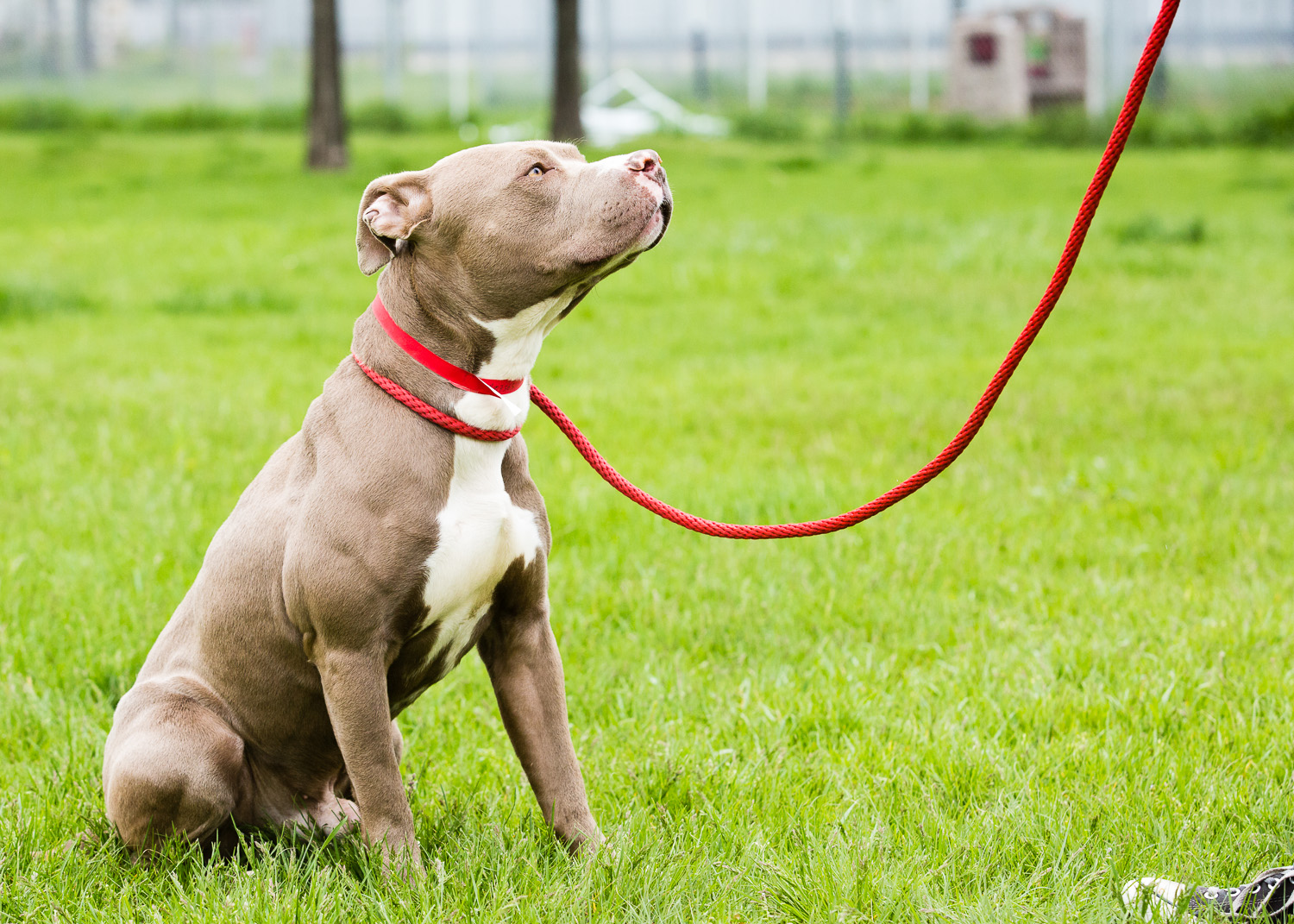 dog-foster-05-17-14-rizzo-2